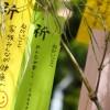 平塚七夕祭り2015年の開催日時や駐車場は?