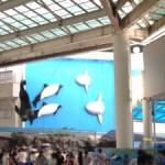 松島水族館が閉館!?その理由とは・・・?閉館後はどうなるの?