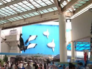 松島水族館,閉館,理由