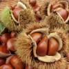 栗の栄養は美容にも効果的!秋の味覚をとって綺麗になろう!