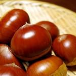 栗の保存方法とは?美味しく栗を食べるためにはどうすればよい?