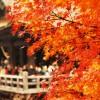 京都の紅葉は必見!2015年も綺麗に見られること間違いなし!