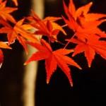 大阪の紅葉の名所はたくさん!2015年にオススメしたいスポットは?