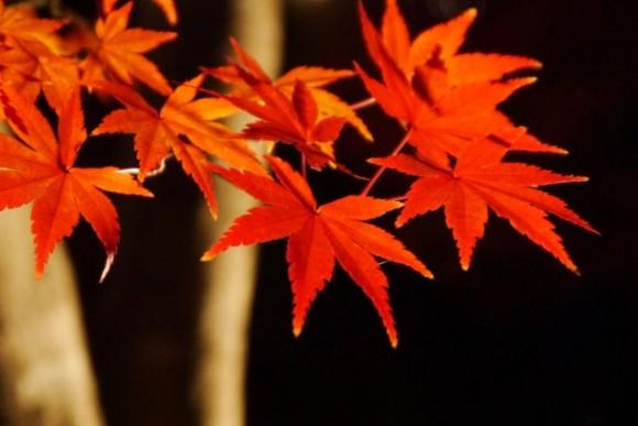 大阪 紅葉