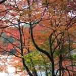 紅葉スポットがたくさんある長野県の紅葉情報をご紹介します!