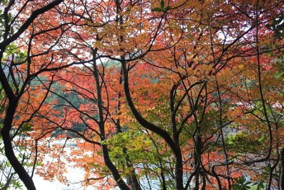 長野 紅葉