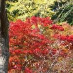 兵庫県の紅葉をどんどん楽しもう!おすすめの紅葉スポットは?