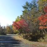 紅葉を福島県で綺麗に見られるところの情報を一気にご紹介!