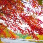 紅葉を栃木県で見たい!おすすめスポットはどんな所がある?