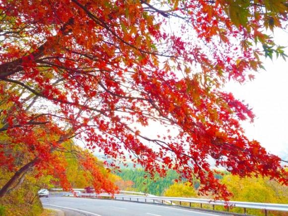 栃木 紅葉