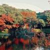 紅葉を東京で綺麗に見たいならぜひオススメしたい名所をご紹介します!