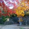 岡山県の紅葉スポットの見頃はいつ頃なのかご紹介していきます!