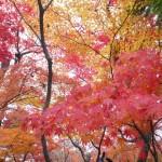 紅葉が綺麗な広島県の名所は?1度はぜひ見に行ってみてください!