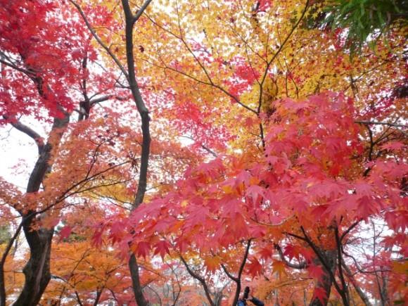 広島 紅葉