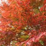 紅葉が綺麗に見られる福岡県のおすすめスポットはどこにある?