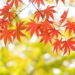 紅葉を和歌山で楽しむために知っておきたい名所と見頃の時期を紹介!