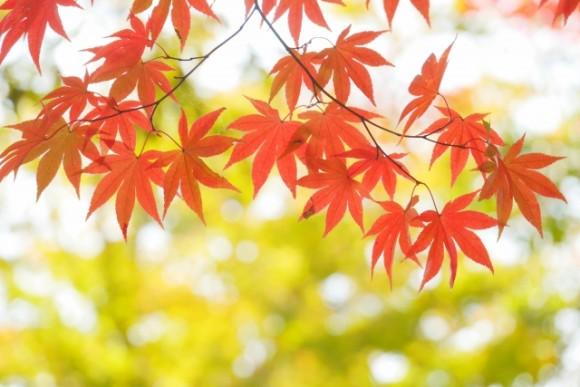 和歌山 紅葉