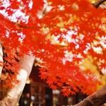 紅葉が美しく見られる千葉県のおすすめスポットとはどこがある?