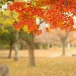 紅葉を山口県で見るならここ!見頃の時期と名所をご紹介します!