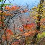 紅葉が奈良で綺麗に見られる時期は?おすすめの紅葉スポットは?
