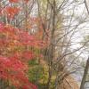 紅葉を北海道で見たい方へ!見頃の時期とオススメの場所をご紹介!