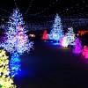 神戸イルミナージュは人気のイベント!口コミもご紹介します!