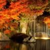 紅葉をライトアップで見たい!関東地方のライトアップスポットは?