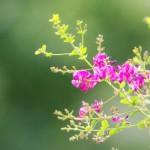 春の七草と秋の七草の違いとは?それぞれどんな意味があるの?