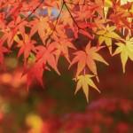 紅葉の名所の人気ランキングをご紹介!どこも素敵な場所でおすすめ!